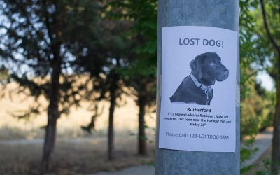 Finding a Lost Pet